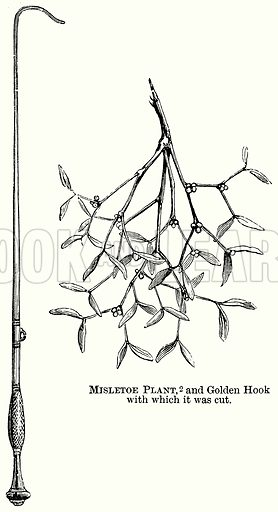 Misletoe Plant, and Golden Hook with which it was Cut. Illustration from The Comprehensive History of England (Gresham Publishing, 1902).