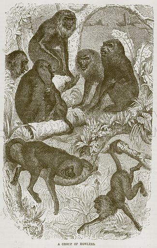 A Group of Howlers. Illustration from Cassell's Natural History (Cassell, 1883).