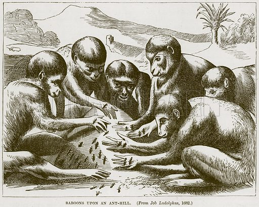 Baboons upon an Ant-Hill. Illustration from Cassell's Natural History (Cassell, 1883).