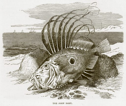 The John Dory. Illustration from Cassell's Natural History (Cassell, 1883).