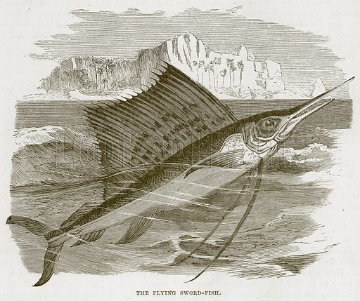 The Flying Sword-Fish. Illustration from Cassell's Natural History (Cassell, 1883).
