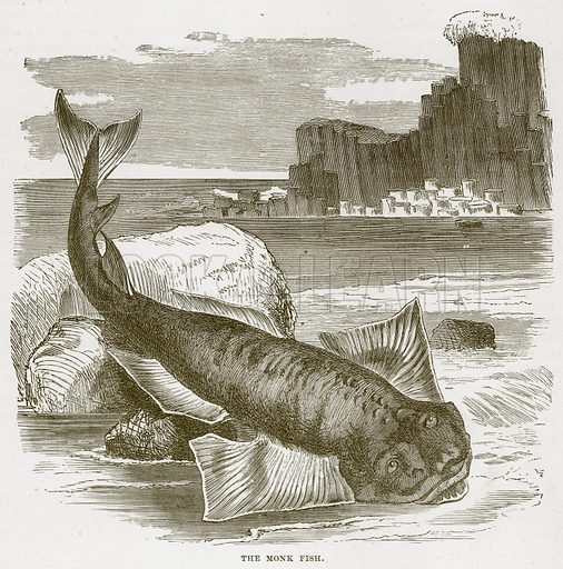 The Monk Fish. Illustration from Cassell's Natural History (Cassell, 1883).