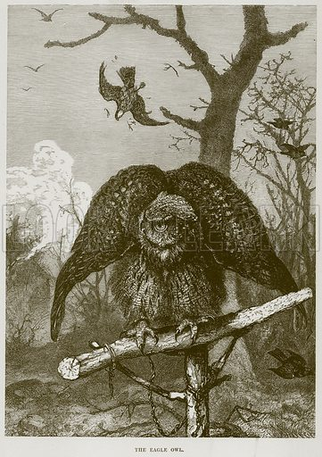 The Eagle Owl. Illustration from Cassell's Natural History (Cassell, 1883).