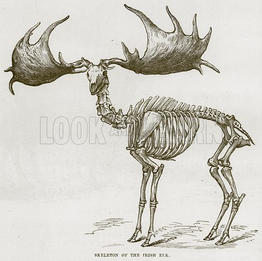 Skeleton of the Irish Elk. Illustration from Cassell's Natural History (Cassell, 1883).