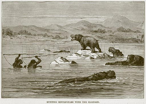 Hunting Hippopotami with the Harpoon. Illustration from Cassell's Natural History (Cassell, 1883).