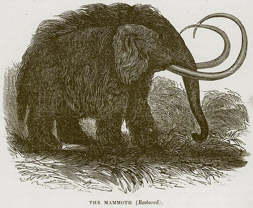 The Mammoth (Restored). Illustration from Cassell's Natural History (Cassell, 1883).