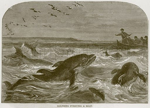 Dolphins Pursuing a Boat. Illustration from Cassell's Natural History (Cassell, 1883).