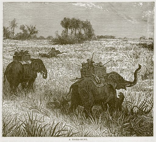 A Tiger-Hunt. Illustration from Cassell's Natural History (Cassell, 1883).
