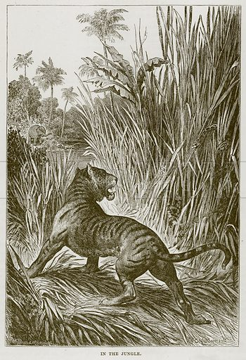 In the Jungle. Illustration from Cassell's Natural History (Cassell, 1883).