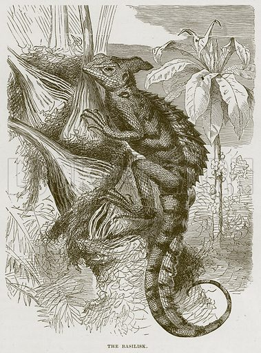 The Basilisk. Illustration from Cassell's Natural History (Cassell, 1883).