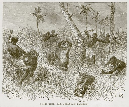 A Soko Hunt. Illustration from Cassell's Natural History (Cassell, 1883).
