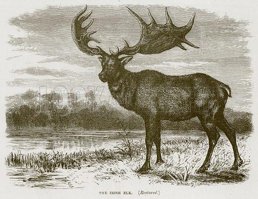 The Irish Elk. (Restored.) Illustration from Cassell's Natural History (Cassell, 1883).
