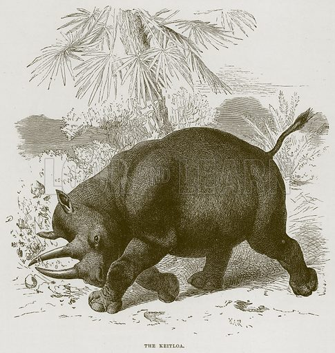 The Keitloa. Illustration from Cassell's Natural History (Cassell, 1883).