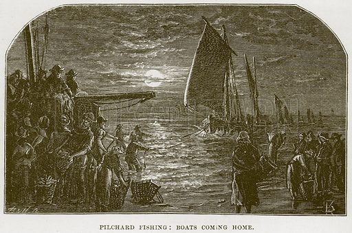 Pilchard Fishing: Boats coming Home. Illustration from Our Own Country (Cassell, c 1870).