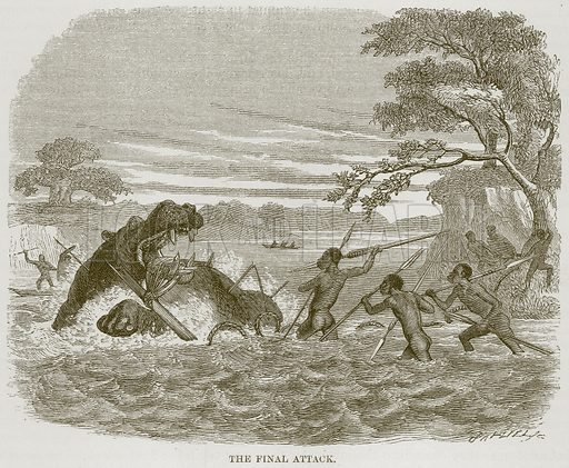 The Final Attack. Illustration for The Natural History of Man by JG Wood (George Routledge, 1868).