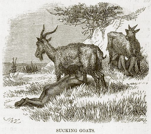 Sucking Goats. Illustration for The Natural History of Man by JG Wood (George Routledge, 1868).