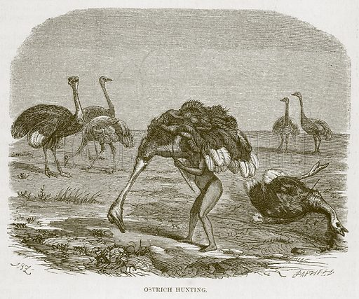 Ostrich Hunting. Illustration for The Natural History of Man by JG Wood (George Routledge, 1868).