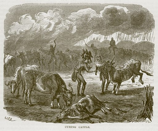 Curing Cattle. Illustration for The Natural History of Man by JG Wood (George Routledge, 1868).