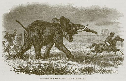 Aggageers Hunting the Elephant. Illustration for The Natural History of Man by JG Wood (George Routledge, 1868).
