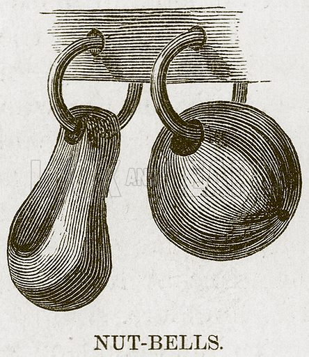 Nut-Bells. Illustration for The Natural History of Man by JG Wood (George Routledge, 1868).