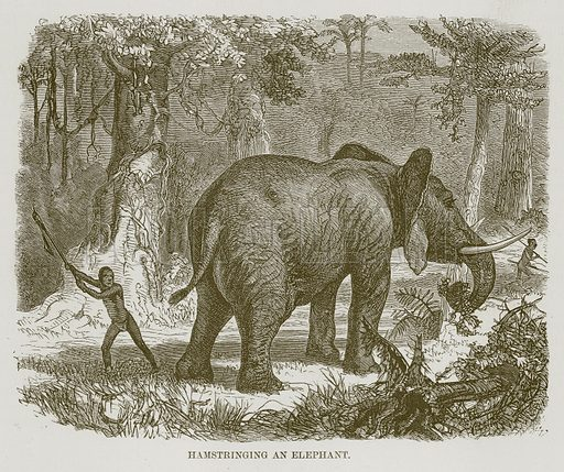 Hamstringing an Elephant. Illustration for The Natural History of Man by JG Wood (George Routledge, 1868).