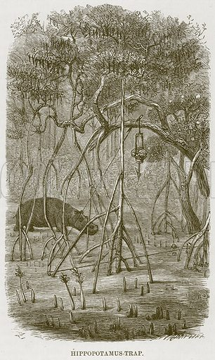 Hippopotamus-Trap. Illustration for The Natural History of Man by JG Wood (George Routledge, 1868).