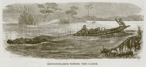 Hippopotamus Towing the Canoe. Illustration for The Natural History of Man by JG Wood (George Routledge, 1868).