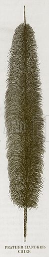 Feather Handker-Chief. Illustration for The Natural History of Man by JG Wood (George Routledge, 1868).