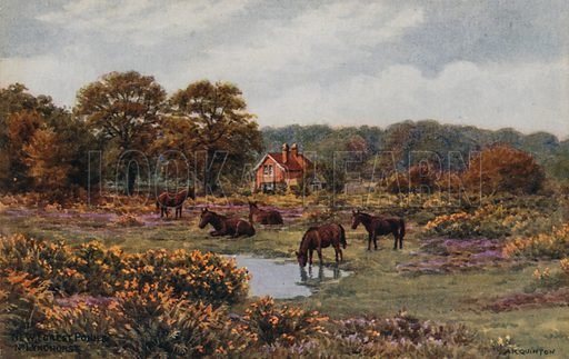 New Forest Ponies, Lyndhurst.