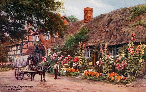 Hollyhocks, Cropthorne, Evesham.