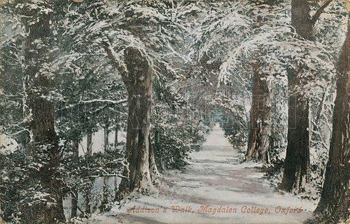 Addison's Walk, Magdalen College, Oxford
