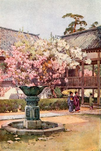Cherry Blossom, Chion-in Temple