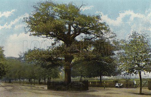 The Midland Oak, Leamington