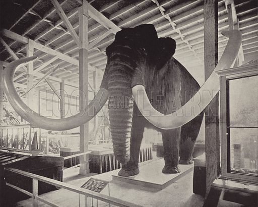 The Great Siberian Mammoth