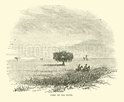 View on the Teche, April 1863. Illustration for Harper's Pictorial History of the Civil War (McDonnell Bros, 1886).