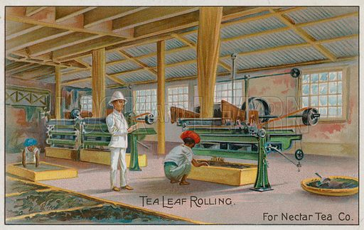 Tea Leaf Rolling, For Nectar Tea Co, trade card.