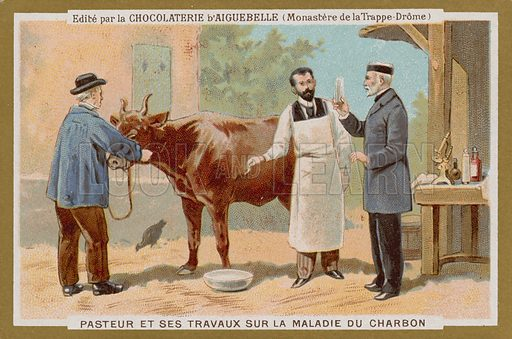 Chocolat d'Aiguebelle trade card, with an image depicting Louis Pasteur and his work on an anthrax vaccination.