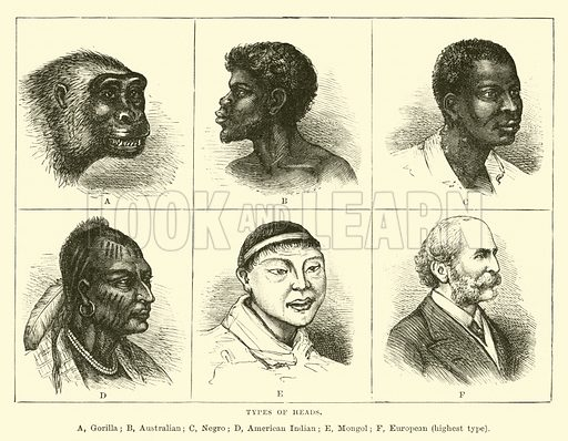 Types of heads