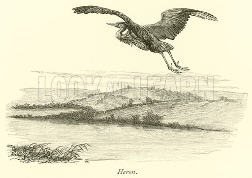 Heron. The Thames from its Rise to the Nore by Walter Armstrong (Virtue, c 1885).