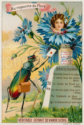 Cornflower and beetle. Liebig card, from a series on the Kingdom of Flora, published in late 19th or early 20th century.