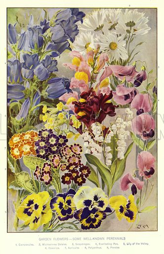 Garden Flowers, some well-known Perennials. Illustration for The Book of the Home edited by CE Humphry (Gresham, 1910).