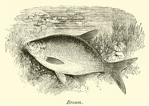 Bream. The Thames from its Rise to the Nore by Walter Armstrong (Virtue, c 1885).