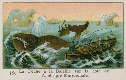 Whaling off the coast of South America. Educational card.