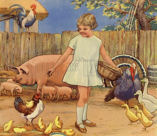 Girl feeding farmyard animals