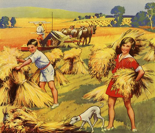 Children helping at harvest time