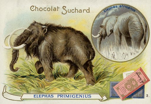 Woolly mammoth and African elephant