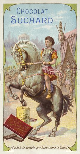 Bucephalus, picture, image, illustration