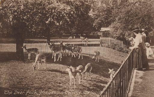 The Deer Park, Magdalen College, Oxford