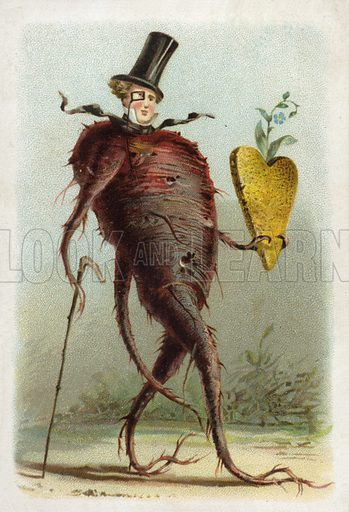 Beetroot. French educational card, late 19th/early 20th century.