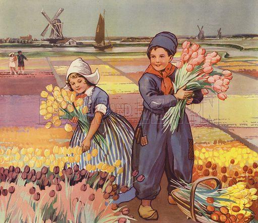 Children picking tulips in Holland